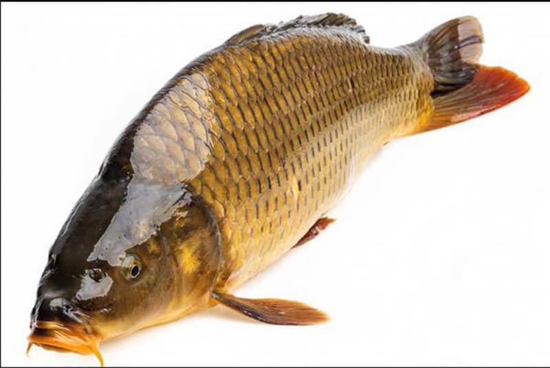 Nằm mơ thấy cá chép