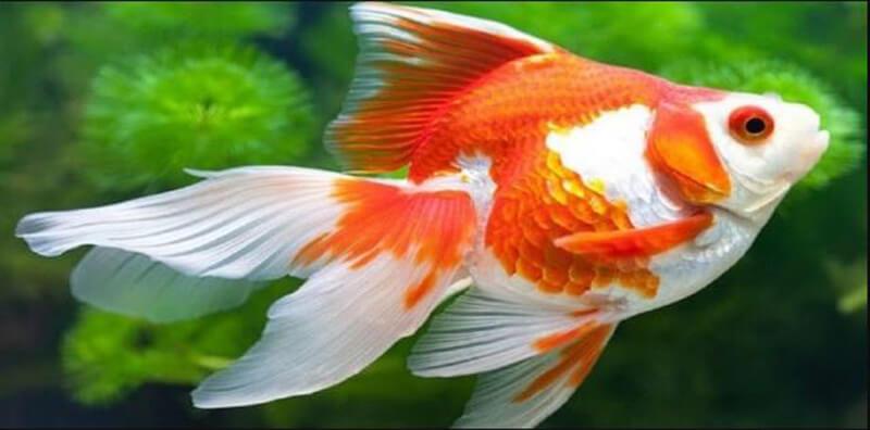Nằm mơ thấy cá báo hiệu điềm gì?