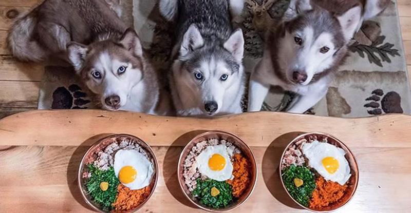 Cách Điều Trị Hiệu Quả Cho Chó Lười Ăn