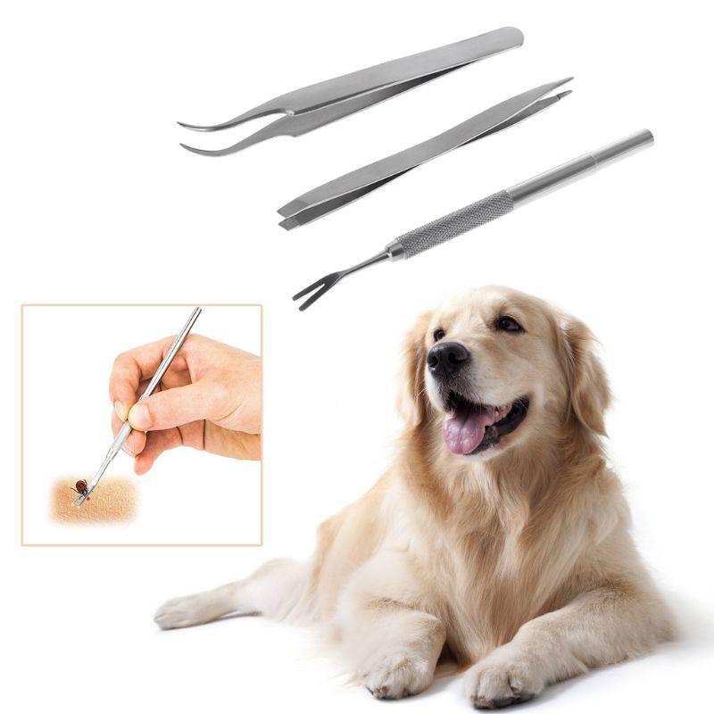Bắt ve chó bằng nhíp