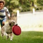 6 món đồ chơi cho chó phổ biến đơn giản dễ làm