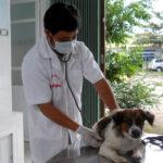 top 9 bệnh nguy hiểm ở chó bạn không nên bỏ qua khi nuôi.