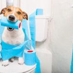 Mẹo hình thành tập tính cho chó đi vệ sinh đúng chổ hiệu quả nhất 2020