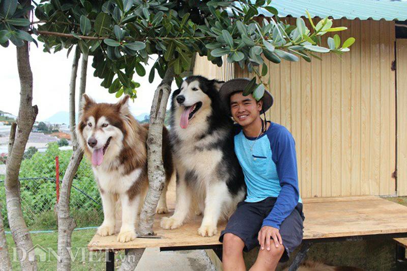 Các điểm giống nhau dễ nhầm lẫn khi phân biệt chó Alaska và Husky
