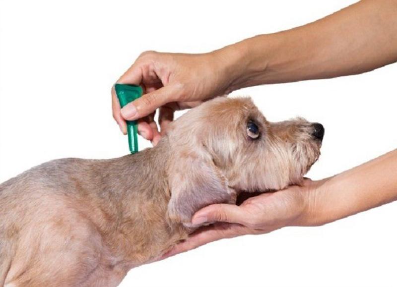 Thuốc xịt, nhỏ trị ve chó