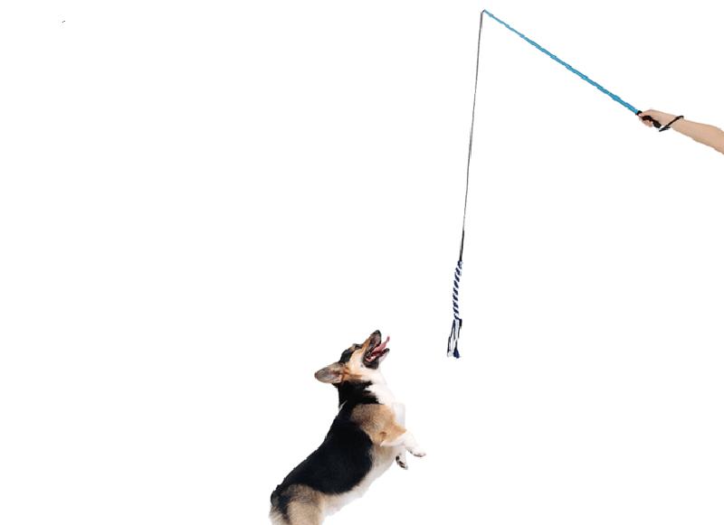 Làm đồ chơi cho chó bằng vãi